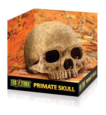 Ex terrarium decor human skull  17x13,5x11,5CM