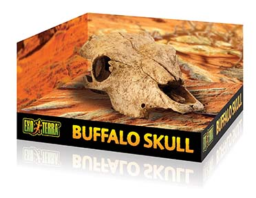 Ex terrarium decor cattle skull  24x14x9CM