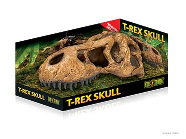 Ex t-rex skull fossil hide-out