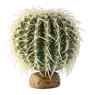 Ex barrel cactus, large  M