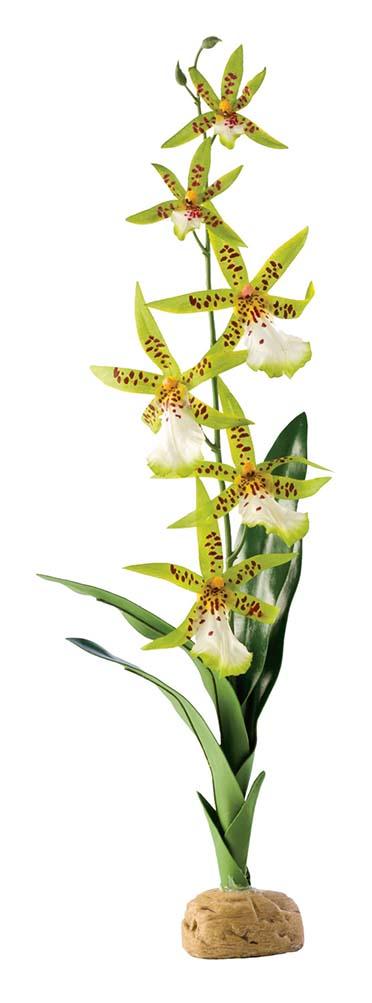 Ex spider orchid