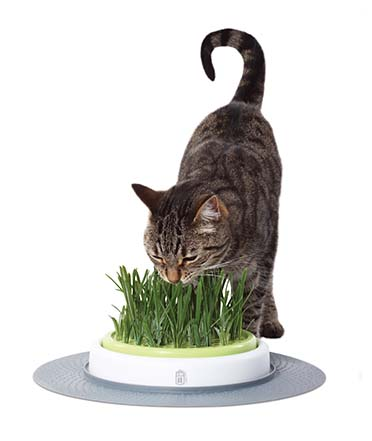 Ca design senses grass garden kit