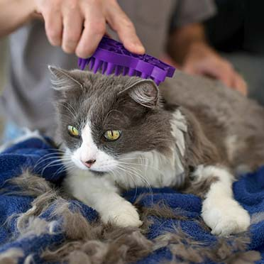 Kong cat zoom groom Purple