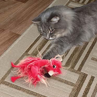 Kong cat softies frizz bird Gemengde kleuren 6,5x9,53x20cm