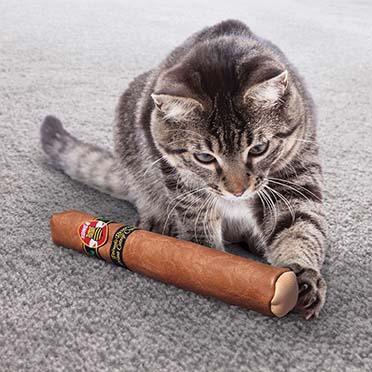 Kong cat better buzz cigar