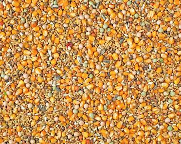 Natural moulting maxi 2m popcorn  25KG