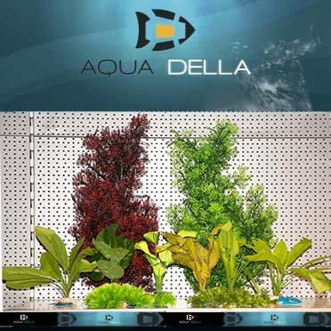 Concept aqua della nieuwe plantjes