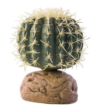 Ex barrel cactus  S