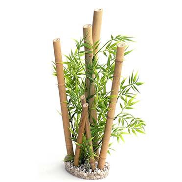 Bamboo xl plants  38CM