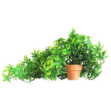 Sydeco florida vivarium  30cm