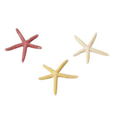Starfish mix  S - 10CM