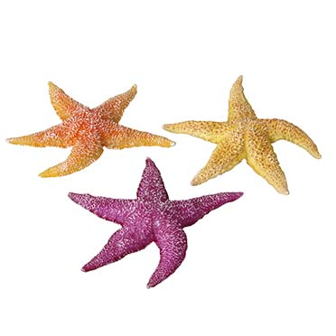 Real sea star assorted  17x15x2,3CM