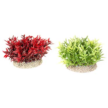 Plant miracle moss Mixed colors S - height 7,5CM