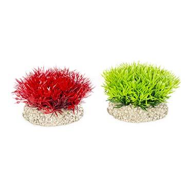 Plant crystalwort moss Gemengde kleuren S - height 5CM