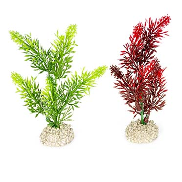 Plant elodea densa Mixed colors S - height 13CM