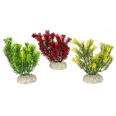 Plant canadensis Mixed colors S - height 13CM