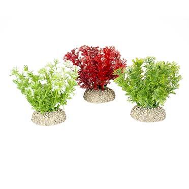 Plant hottonia Gemengde kleuren S - height 10CM
