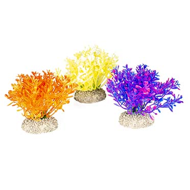 Plant glosso Mixed colors S - height 9CM