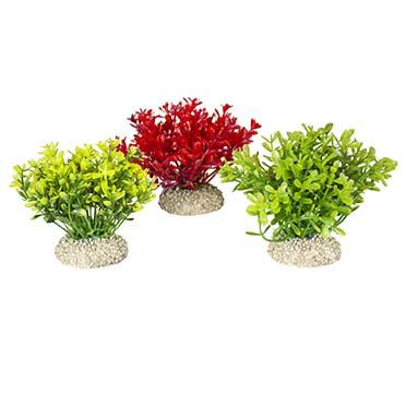 Plant glosso Gemengde kleuren S - height 9CM
