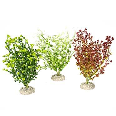 Plant bacopa Gemengde kleuren M - height 25CM