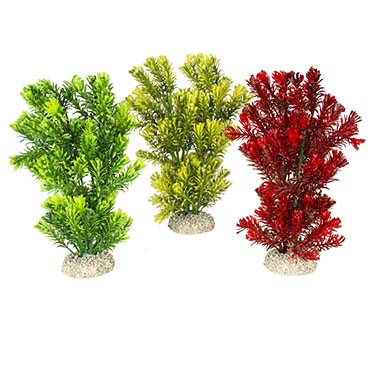 Plant canadensis Mixed colors M - height 23CM