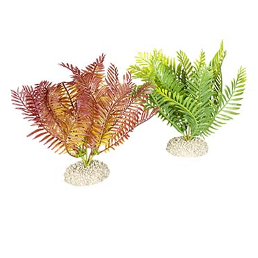 Plant bolbitis Mixed colors M - height 17,5CM