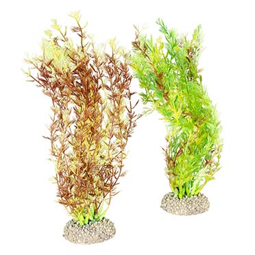Plant egeria densa Mixed colors M - height 25CM