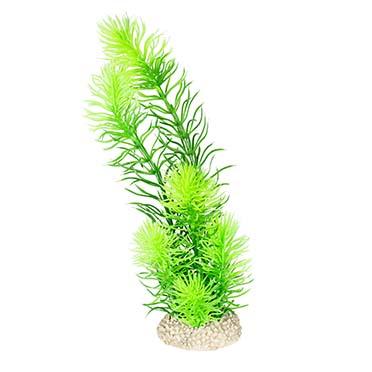 Plant hornwort Donkergroen M - height 24CM