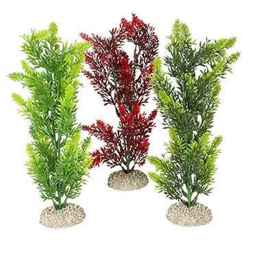 Plant elodea densa Mixed colors M - height 25CM