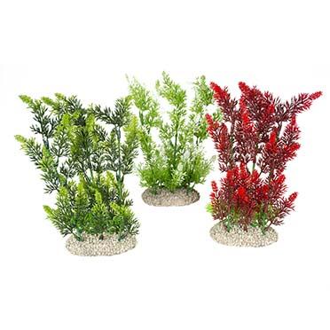 Plant elodea densa Gemengde kleuren L - height 25CM
