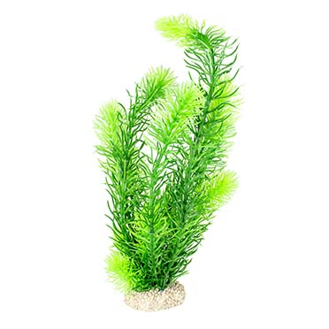 Plant hornwort Dark green L - height 32CM