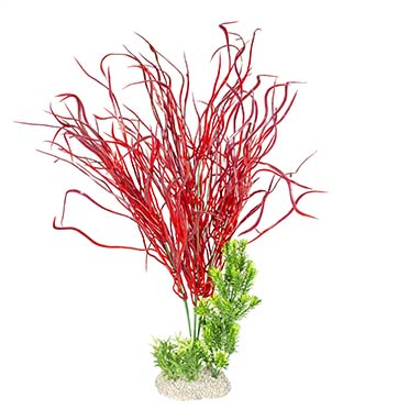 Plant lily grass Mixed colors XL - height 50CM