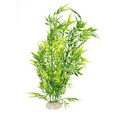 Plant bamboo Groen XL - height 37CM