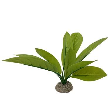 Echinodorus 3 Vert 24cm