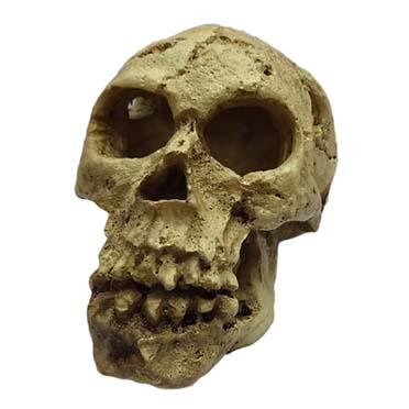 Décoration crâne  10,5x7x7,5CM