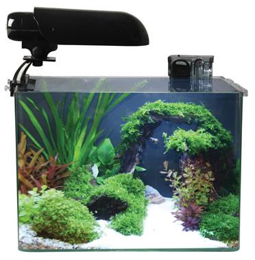 Cocoon aquarium nr 4  31x19x26CM